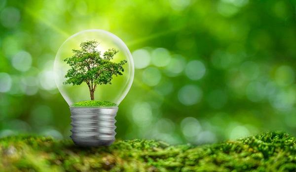 Bohlam dengan Bagian dalam Berisi Dedaunan Hutan dan Pepohonan Berada dalam Cahaya, Konsep Pelestarian Lingkungan dan Tanaman Pemanasan Global Tumbuh di Dalam Bola Lampu Selama Kering